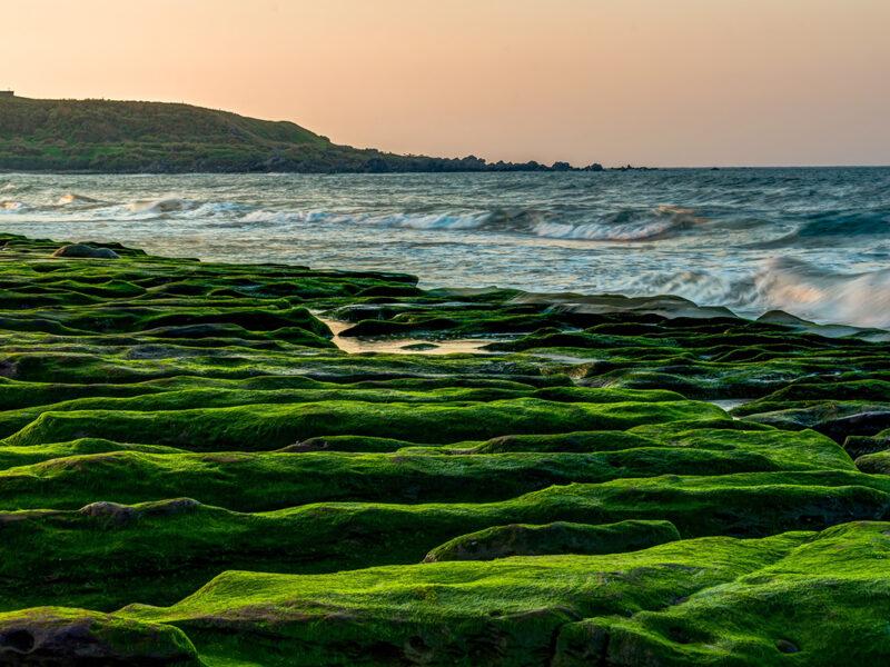 Algen in der Kosmetik Foto: Pixabay
