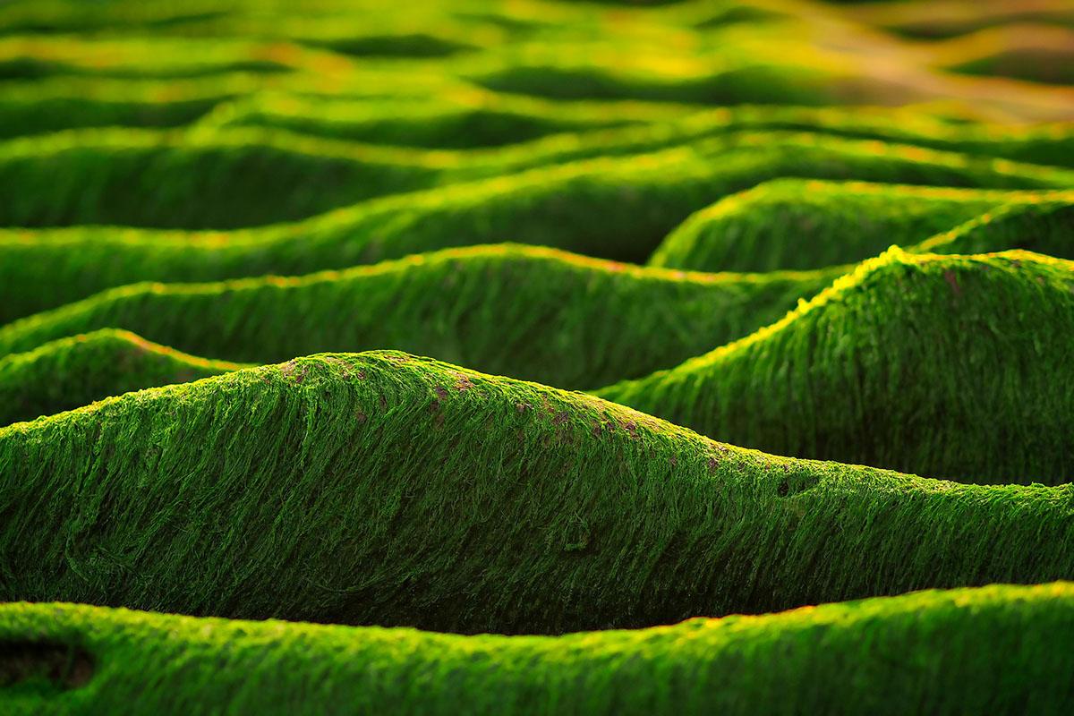 Algen in der Kosmetik , Foto: Pixabay