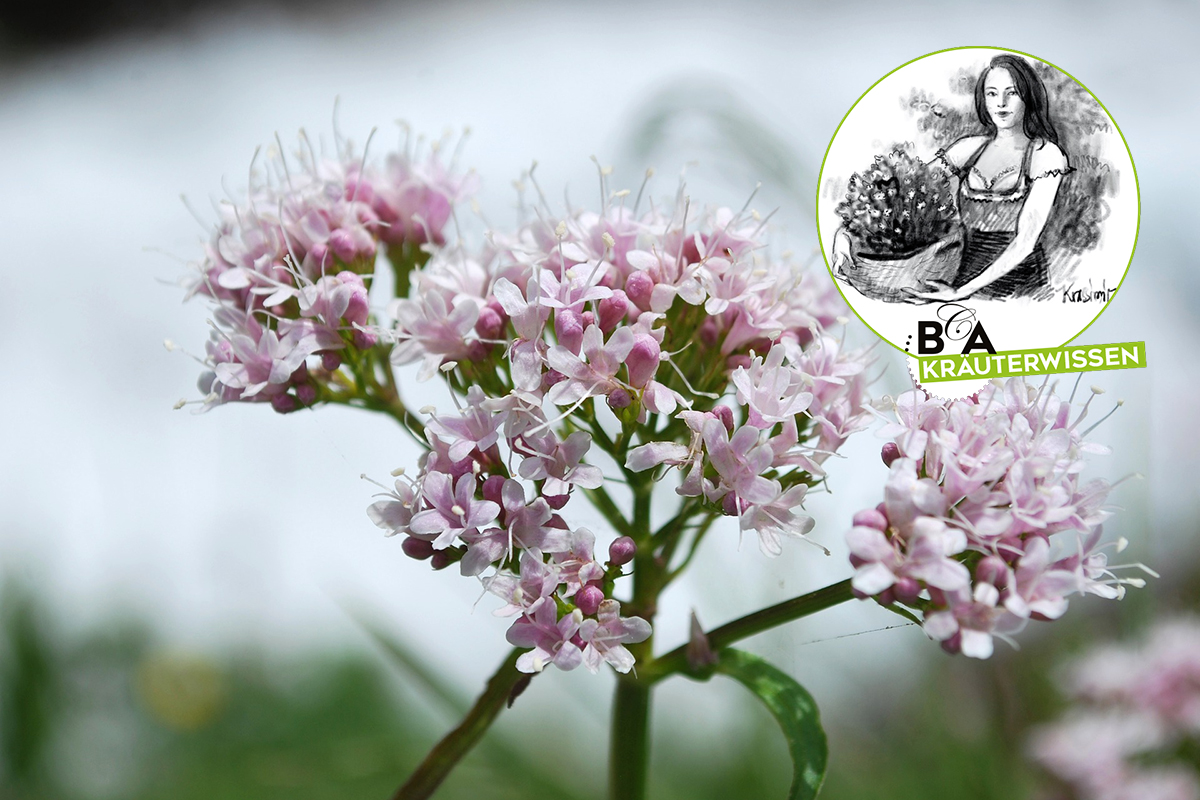 Na BIO logisch Obergrafendorfer Bio & Regional Markt   Beauty ...