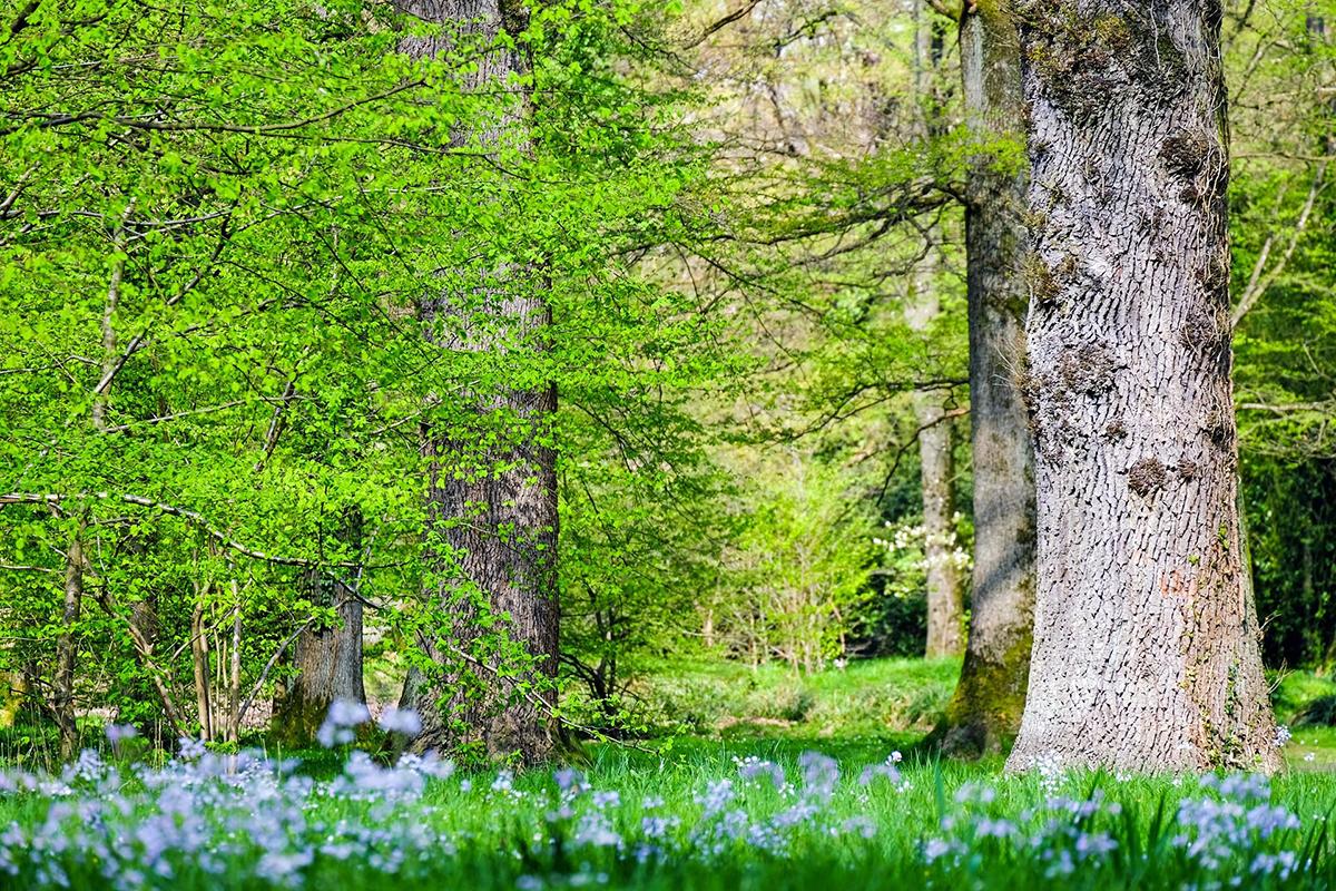 Frühlingswald, Foto: Pixabay