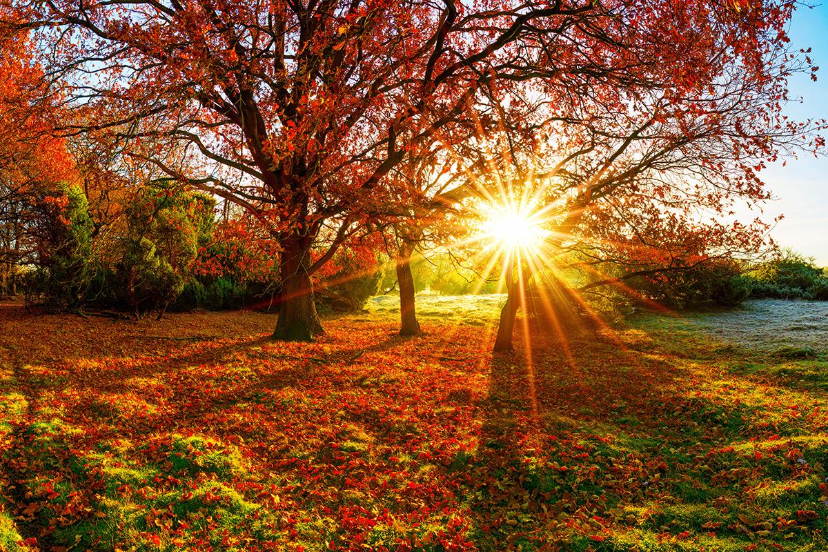 Herbst Foto AdobeStock